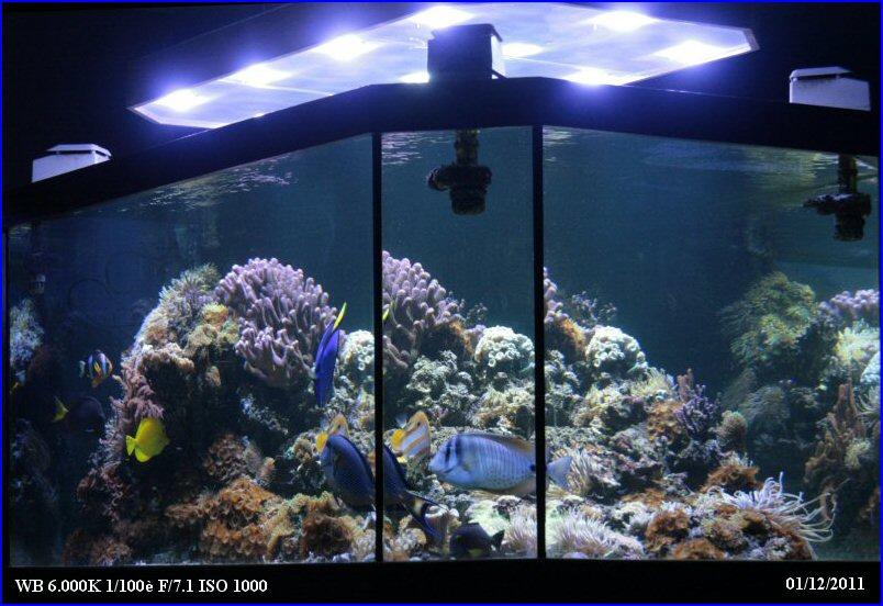 Herv eau de mer for Construire un aquarium